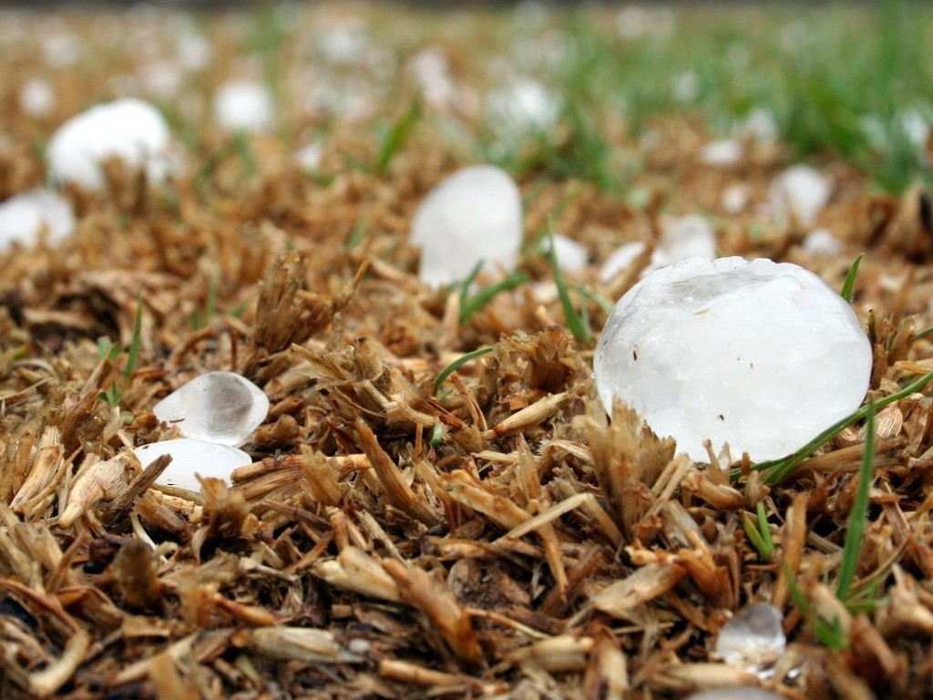 Large hail stones due to global warming.