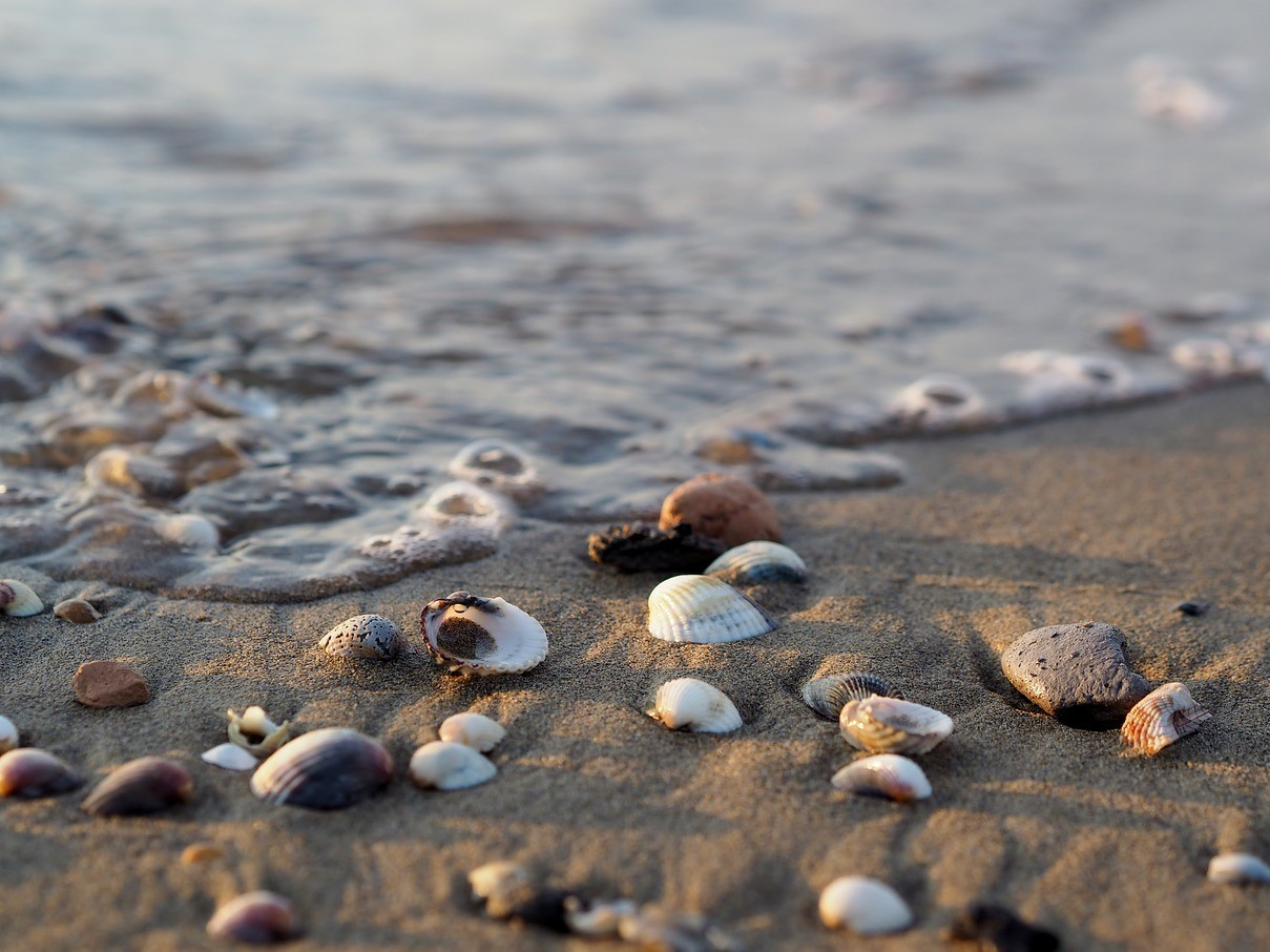 Sea water on the beach with shells. Salt water as drinking water.